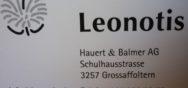 Impressionen 14121 Album Berner Münster Weihnachtsmarkt